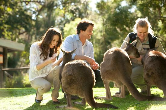 Family and Wildlife keeper interacting with 3 Kangaroos