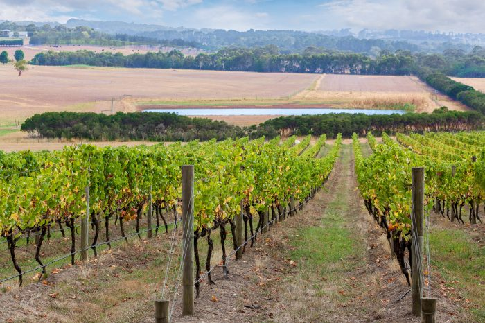 Mornington Peninsula Small Group Wine Tour