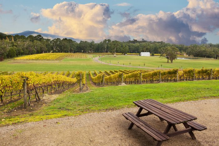 Yarra Valley Wine Tour